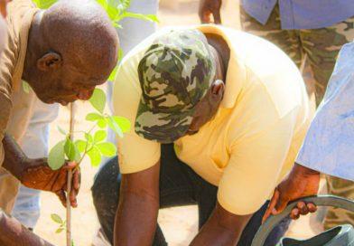 Campagne de reboisement : Le mouvement Parcelles assainies en marche prône pour une verdure